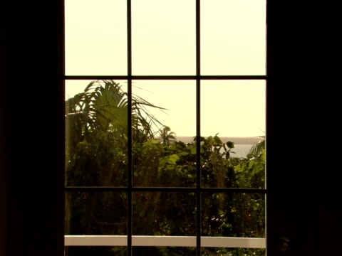 stockvideo's en b-roll-footage met ms,  tropical foliage in breeze,  view through window,  harbour island,  bahamas - waaierpalm