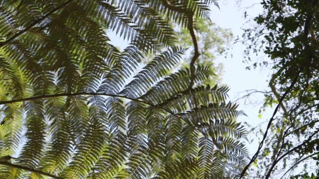 Tropical foliage pan lens flare