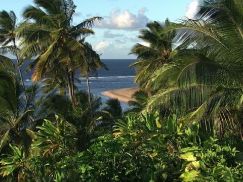 tropical foliage. - isole hawaii video stock e b–roll