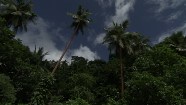tropical forest and coconut palms (cocos nucifera), pentecost, vanuatu - pentecost stock videos & royalty-free footage