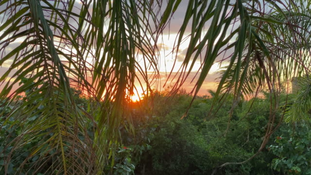 tropical forest and ocean sunset - coconut palm tree stock videos & royalty-free footage