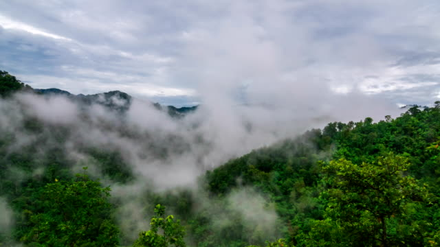 tropical forest during monsoon rain season. Timelapse video