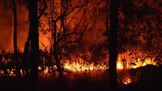 4k tropical forest fire burning, wildfire lockdown shot at night - australia stock videos & royalty-free footage
