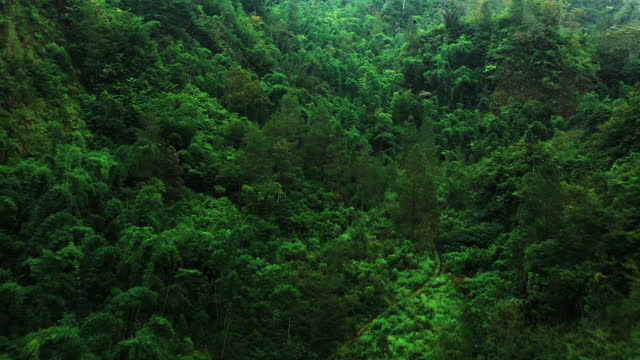 tropical forest from above - beauty in nature stock videos & royalty-free footage