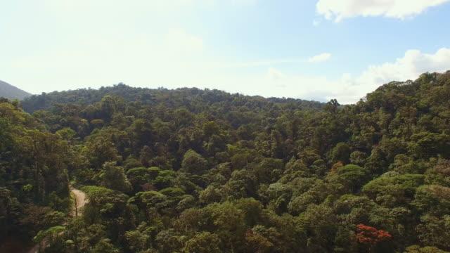 aerial tropischen regenwald in costa rica - costa rica stock-videos und b-roll-filmmaterial