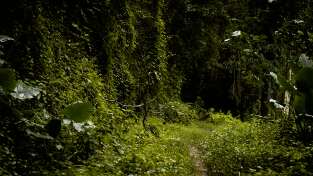 tropical forest pathway - footpath stock videos & royalty-free footage