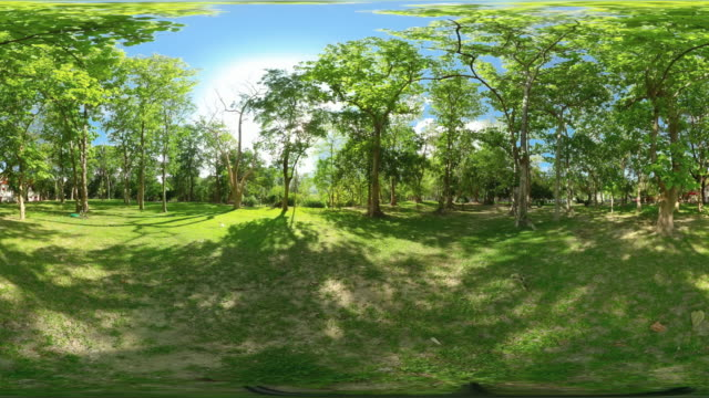 360 tropical forest tree on a clear day - panoramic stock videos & royalty-free footage