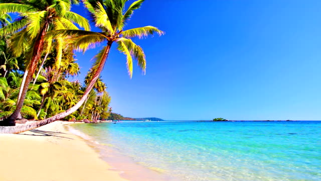 tropical golden sand beach