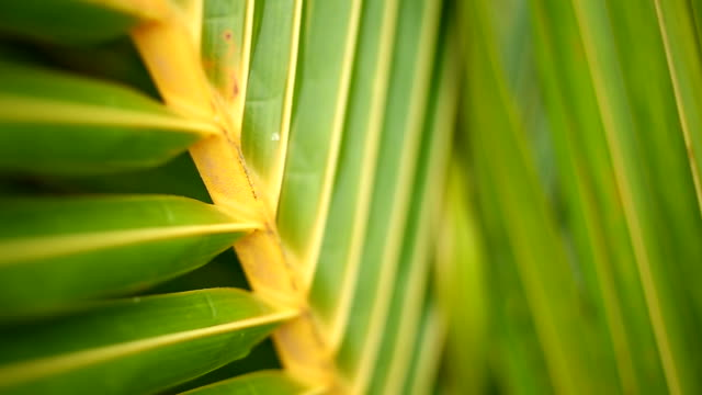 Tropical green palm leaf in macro blowing in the wind