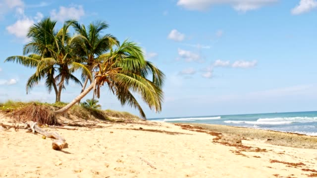 tropical holiday beach - tropical tree stock videos & royalty-free footage