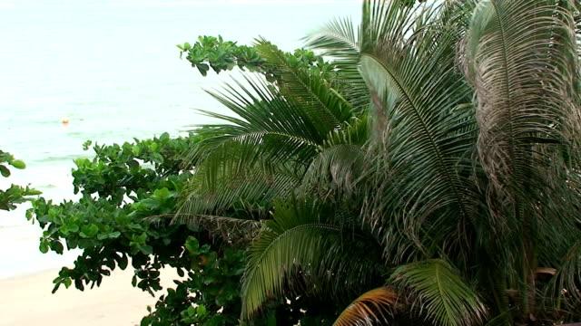 stockvideo's en b-roll-footage met tropical holiday - goede staat