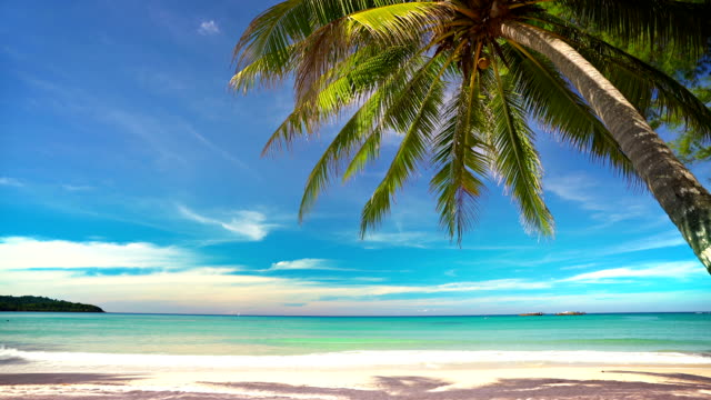 tropical island and palm tree - tropical tree stock videos & royalty-free footage