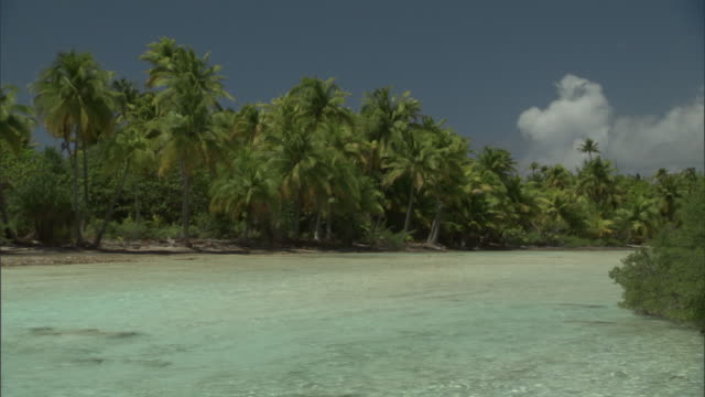 tropical island, coconut palms (cocos nucifera) and lagoon, fakarava atoll, french polynesia - inquadratura fissa video stock e b–roll