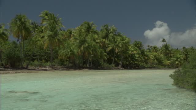 Tropical island, coconut palms (Cocos nucifera) and lagoon, Fakarava Atoll, French Polynesia