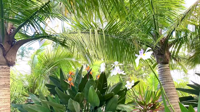 tropical island garden moving in the breeze - non urban scene stock videos & royalty-free footage