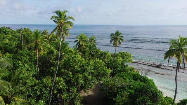 vídeos de stock, filmes e b-roll de console tropical no oceano, maldives - palmeira