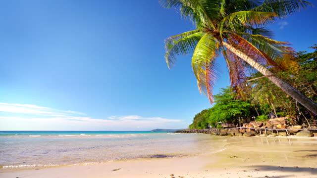 Tropical island. Nature