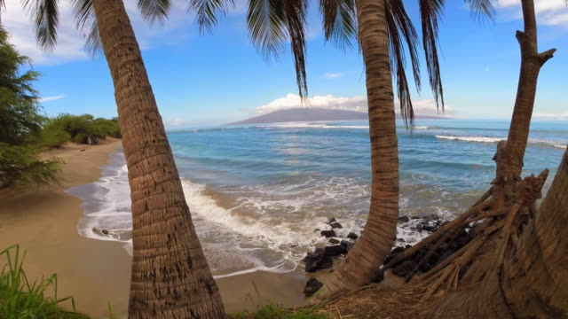 tropical island scene, from palm tree cluster to open ocean in maui, hi - maui stock videos & royalty-free footage