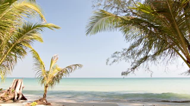 vidéos et rushes de île tropicale - plante sauvage