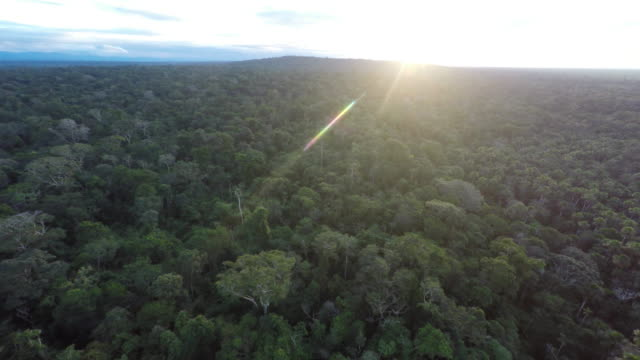 tropical jungle amazon pan in peru - hovering stock videos & royalty-free footage