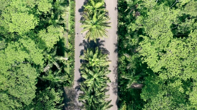 バリ島のトロピカルジャングルを道路で割ったもの