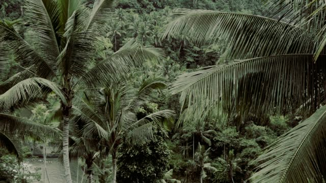 tropical jungle on bali - biodiversity stock videos & royalty-free footage