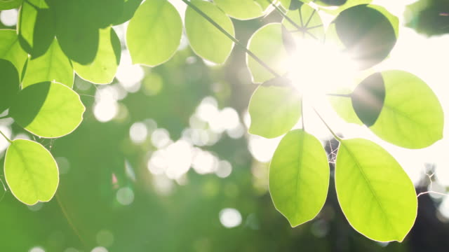 tropical leaf with sunlight and lens flare - sunbeam stock videos & royalty-free footage