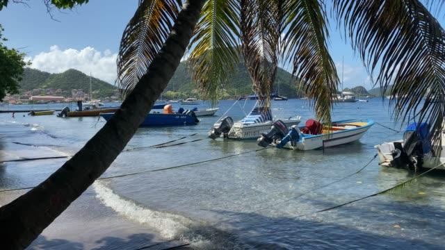vidéos et rushes de tropical les saintes bay, small boats, palm tree, swimming, terre de haut island, iles des saintes, guadeloupe, west indies, caribbean, central america - guadeloupe