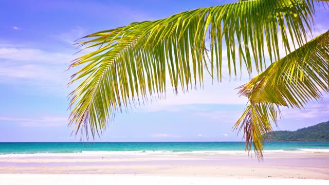 tropical luxury beach. palm tree - tropical tree stock videos & royalty-free footage