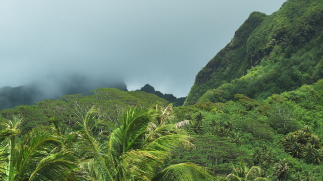 stockvideo's en b-roll-footage met tropical mountains - tropische boom
