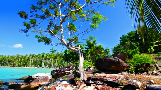 tropical nature - beach, tree on mountain, palm branch - tropical tree stock videos & royalty-free footage