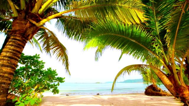 vídeos y material grabado en eventos de stock de la naturaleza tropical - palmera