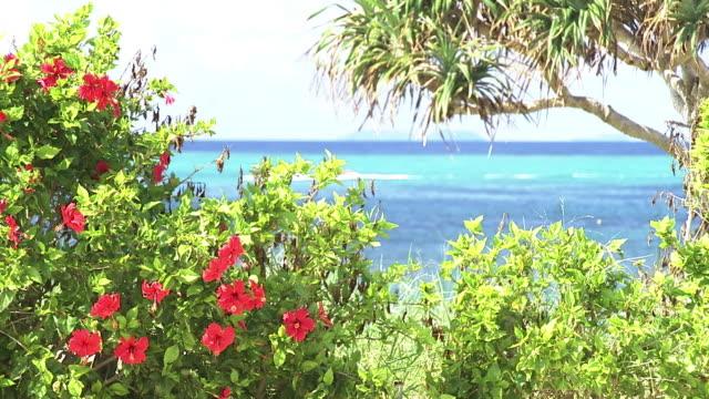 tropical ocean behind hibiscus, okinawa, japan - eibisch tropische blume stock-videos und b-roll-filmmaterial