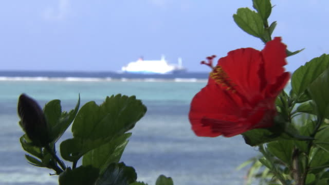 tropical ocean behind hibiscus, okinawa, japan - okinawa stock videos and b-roll footage