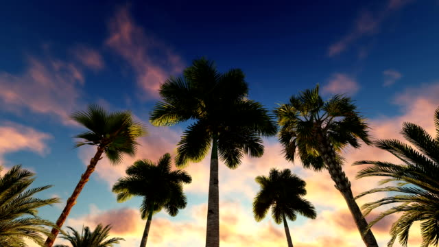 tropical palm island - tropical tree stock videos & royalty-free footage