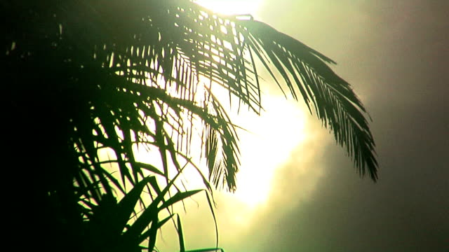 vídeos de stock e filmes b-roll de a tropical palm tree back lit by the sun burning through thick clouds. - back lit