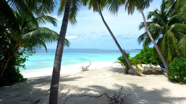 tropical paradise - ayada island - palm tree stock videos & royalty-free footage