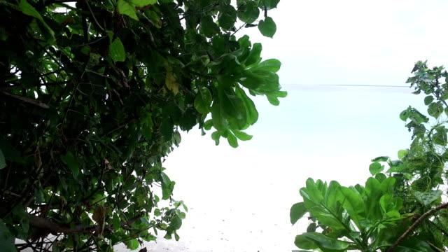 tropisches paradies, luxus-urlaub auf den malediven - insel ayada - karibisches meer stock-videos und b-roll-filmmaterial