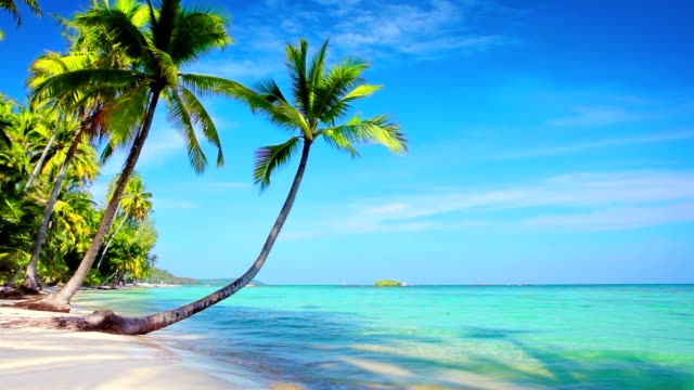tropical paradise. - palm tree stock videos & royalty-free footage