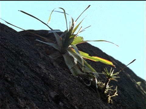a tropical plant grows on a rock formation. - felswand stock-videos und b-roll-filmmaterial