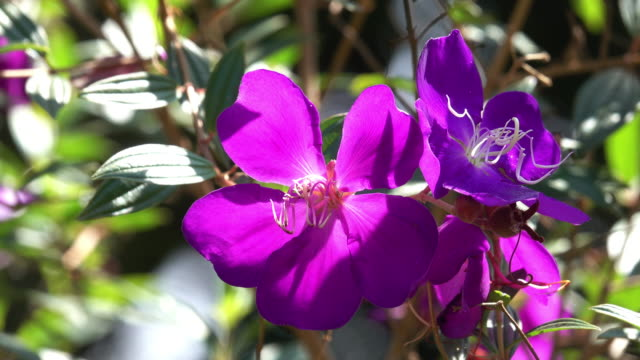 tropical purple flower - tropical flower stock videos and b-roll footage