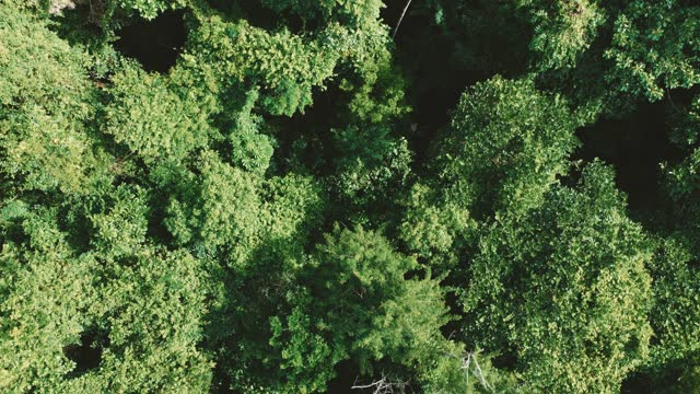 tropical rain forest aerial view of amazon forest green tree - tropical rainforest stock videos & royalty-free footage