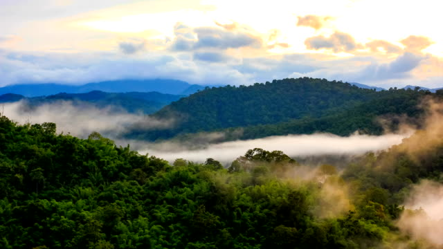 tropical rain forest in misty - malaysia stock videos & royalty-free footage