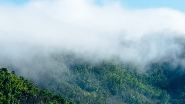 Tropical rain forest in misty