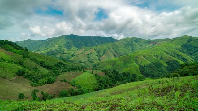 vídeos de stock, filmes e b-roll de floresta tropical na montanha - parélio