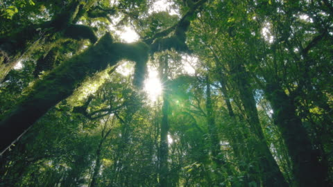 tropical rain forest trees, birth of cloud - plant stock videos & royalty-free footage