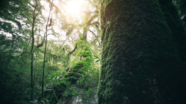 tropical rain forest trees, birth of cloud - tropical climate stock videos & royalty-free footage