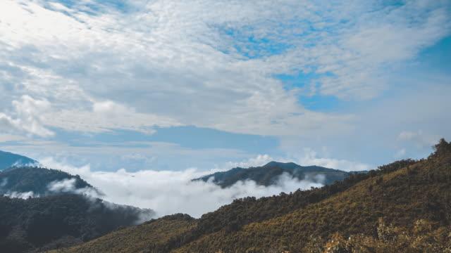 vídeos de stock, filmes e b-roll de árvores tropicais da floresta tropical, nascimento da nuvem - parélio