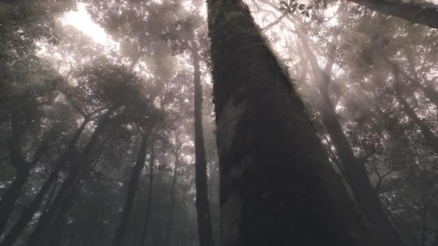vídeos de stock, filmes e b-roll de árvores tropicais tropicais da floresta, nascimento da nuvem - parélio