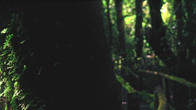 tropical rain forest trees, birth of cloud - sundog stock videos & royalty-free footage